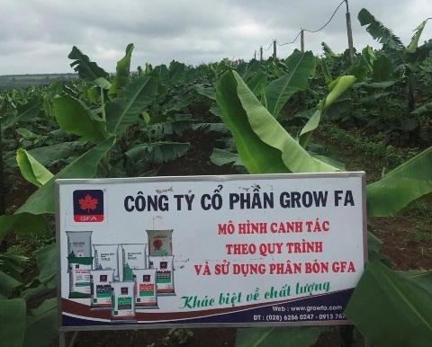 Vườn Chuối sử dụng bón phân GFA