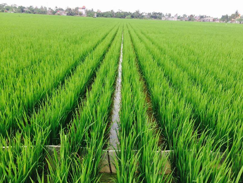 Giải pháp cải tạo đất giúp cây trồng phát triển ổn định