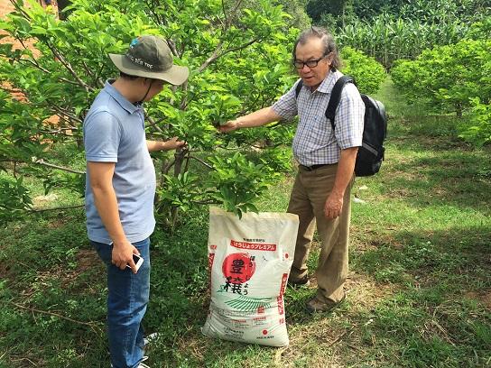 Sử dụng phân hữu cơ vi sinh Nhật trên cây mãng cầu Tây Ninh