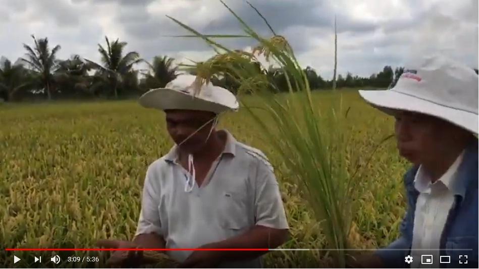 Hiệu quả sử dụng phân bón hữu cơ GFA trên lúa